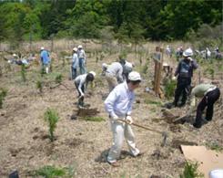 ヒノキ・ハンノキの植樹風景