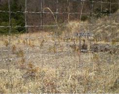 第2回植林活動(下草刈り)前の様子です