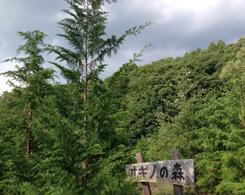 「オギノの森看板」を大きく超えました 上記の5年後の時(2013年5月)と比較してみてください。