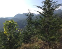 植林場所から荒川ダムが見えない程成長しました